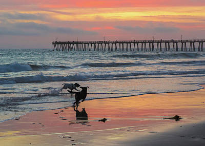 Photograph - Dogs Dancing In The Sunset by John Hembree