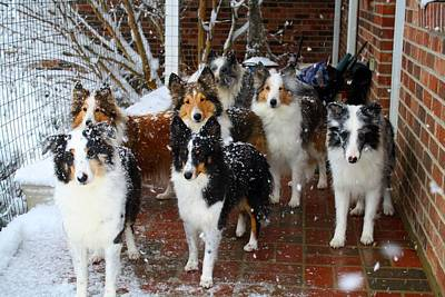 Photograph - Dogs During Snowmageddon by Kathryn Meyer