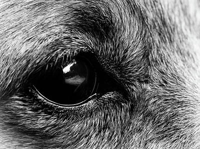 Photograph - Dogs Eye View by Nick Bywater