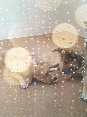 Becky Photograph - Dogs' Bath Time Gazes by Becky Burt