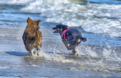 State Love Nancy Ingersoll Rights Managed Images - Dogs in the Surf 7 Royalty-Free Image by Linda Brody