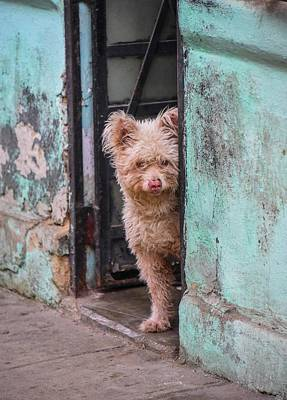 Photograph - Dogs Of Cuba - 2 by Rand