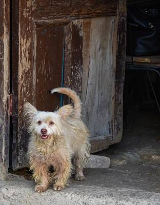 Photograph - Dogs Of Cuba - 3 by Rand