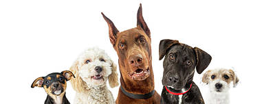 Doberman Pinscher Wall Art - Photograph - Dogs Of Various Sizes Close-up Web Banner by Susan Schmitz