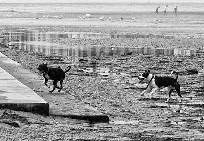 Staffy Photograph - Dogs On The Beach by Philip Openshaw