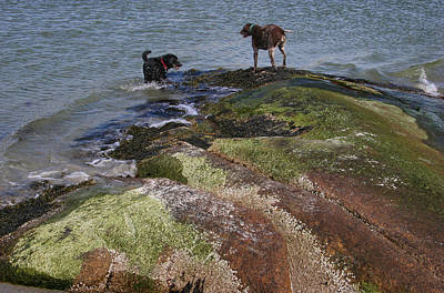 Dogs On The Rocks Art Print by Rose Martin