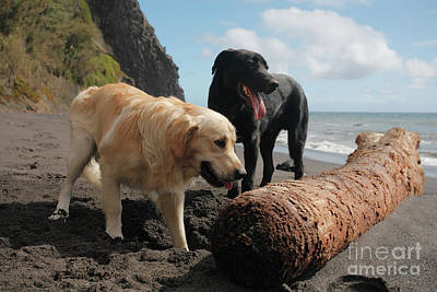 Dogs Playing At The Beach Art Print by Gaspar Avila