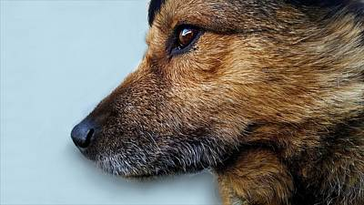Pup Digital Art - Dog's Profile by Irenne Themba