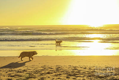 Dogs Running On The Beach Art Print