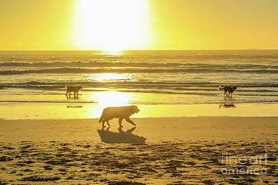 Dogs Running On The Shore Art Print