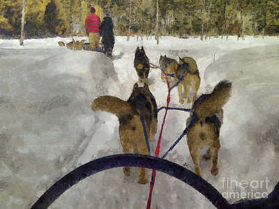 Photograph - Dogsled Afternoon by Claire Bull