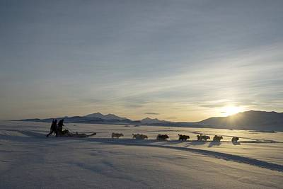 Dogsledge, Northern Greenland Art Print by Louise Murray