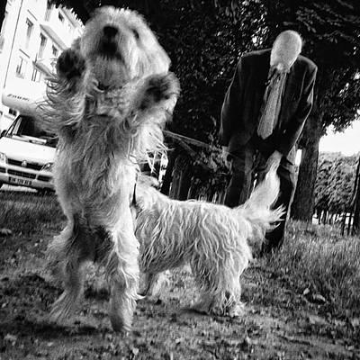 Pets Wall Art - Photograph - #dogsofinstagram #doglover #dog #animal by Rafa Rivas