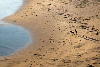 Abstract Male Faces - Dogs Running on Santa Cruz Beach by Mary Lee Dereske