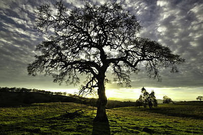Photograph - Dogtown Road Tree - Angels Camp Ca by Eleanor Caputo