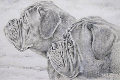 Animal Portrait Drawing - Dogue De Bordeaux by Keran Sunaski Gilmore