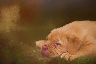 Photograph - Dogue De Bordeaux Painted Puppy by Ericamaxine Price