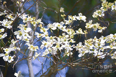 Photograph - Dogwood 4 by Andrea Anderegg