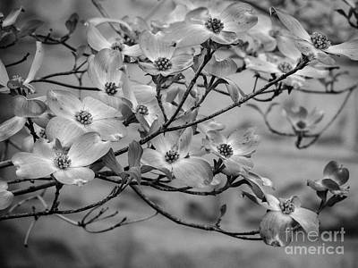 Photograph - Dogwood #4 by Brenda Bostic