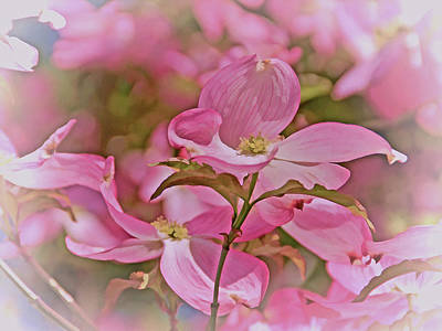Photograph - Dogwood Bliss 11 by Lynda Lehmann