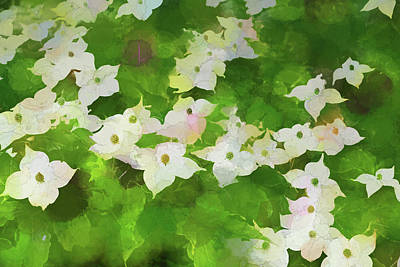 Photograph - Dogwood Blossom Dow Gardens 4 Painterly 2018 by Mary Bedy