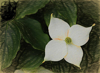 Photograph - Dogwood Blossom Dow Gardens Painterly 2018 by Mary Bedy