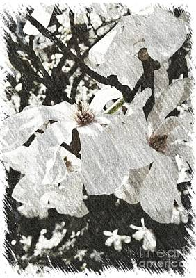 Digital Art - Dogwood Blossom by Julie Knapp