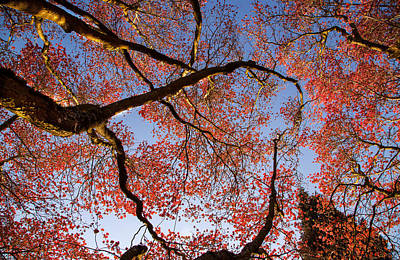 Photograph - Dogwood Blossoms by Kunal Mehra