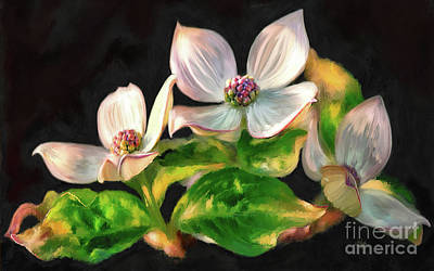 Digital Art - Dogwood Blossoms On A Branch by Lois Bryan