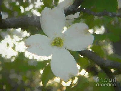 Photograph - Dogwood - Bring On Spring Series by Andrea Anderegg