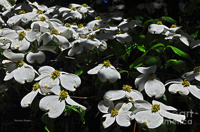 Photograph - Dogwood Delight by Randy Rogers