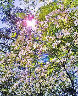 Chemical Glassware - Dogwood in the Sun by Zen WildKitty
