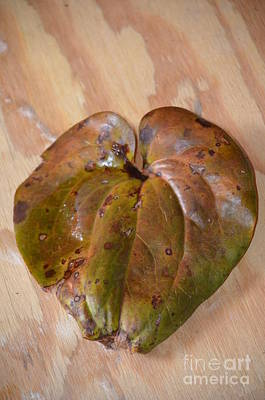 Photograph - Dogwood Leaf On Wood by Maria Urso