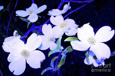 Photograph - Dogwood Night Blooms by Shirley Moravec