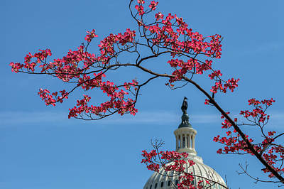 Photograph - Dogwood Over The Capitol by Jonathan Nguyen
