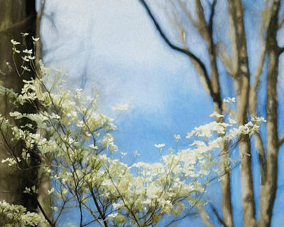 Photograph - Dogwood Study by James Barber