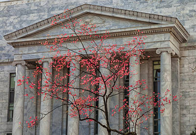 Photograph - Dogwoods And The House Office by Jonathan Nguyen