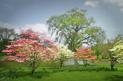 Photograph - Dogwoods At Peace by Diana Angstadt