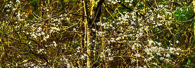 Photograph - Dogwoods In Bloom - Spring Landscape by Barry Jones