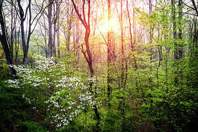 Photograph - Dogwoods In The Forest by Debra and Dave Vanderlaan