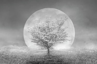 Photograph - Dogwoods In The Moon Black And White by Debra and Dave Vanderlaan
