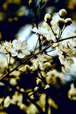 Photograph - Dogwoods In The Shadows by Barry Jones