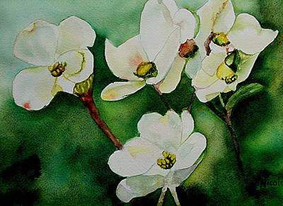 Florals Royalty-Free and Rights-Managed Images - Dogwoods by Nicole Curreri