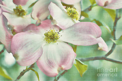 Photograph - Dogwoods On Aqua by Jim And Emily Bush