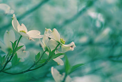 Photograph - Dogwoods by Rima Biswas