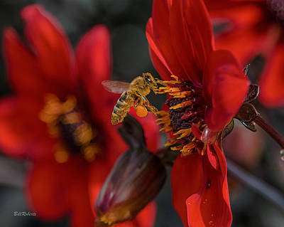 Flower Gardens Photograph - Doing His Bees-ness by Bill Roberts