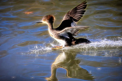Common Merganser Wall Art - Photograph - Doing The Electric Slide by Donna Kennedy