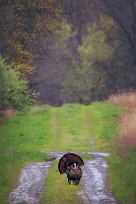 Art Print featuring the photograph Doing The Turkey Strut by Susan Rissi Tregoning