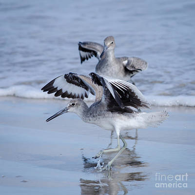 Photograph - Doing The Willet Dance by Debra Martz