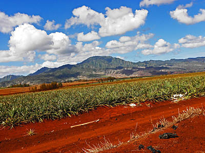 Photograph - Dole Pineapple Fields I by Elizabeth Hoskinson